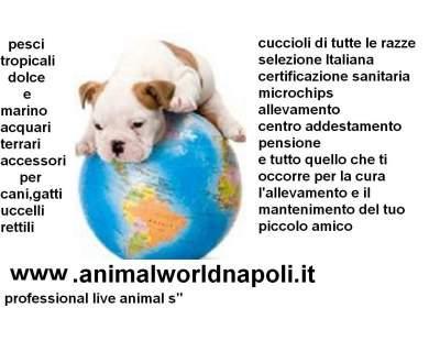 Vendita cuccioli cani e gatti di tutte le razze napoli for Subito annunci campania vendita arredamento casalinghi napoli