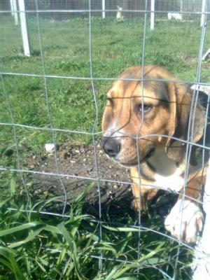 Il cucciolo serafino una storia di umana crudelt for Una storia case in vendita vicino a me