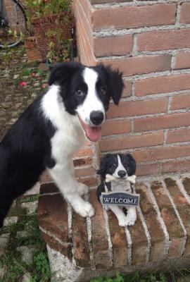 Dog sitter annunci trovalo subito lavoro vendita for Cerco dog sitter